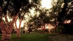 Premium Wedding Package Highlights, Starlight Canyon, Amarillo