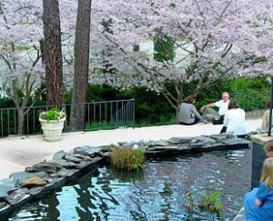 Koi Pond, The Vines Mansion, Loganville