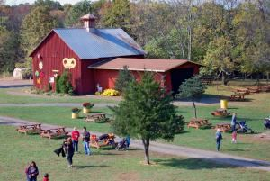 Amazing Farm Fun at Ticonderoga, Chantilly