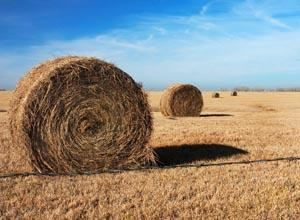 Rolled Hay In A Kansas Field