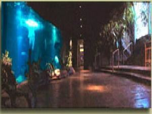 The Orinoco Room, The Dallas World Aquarium, Dallas