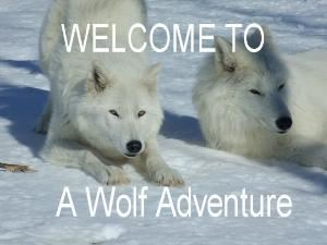 A Wolf Adventure A Wild Encounter, Macdowall — Come and Visit Dharma, and friends on one wild adventure!