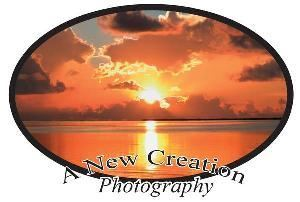 A New Creation Photography, Lakeland