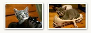 Ryan T. Conaty - Rhode Island Photographer, Providence — These are my kittens