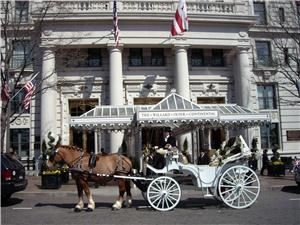 Carriages Of The Capital, Washington — Elegant horse-drawn carriage waits at the Willard Hotel in Washington, DC.  Carriage provided by Carriages of the Capital (www.CarriagesoftheCapital.com).