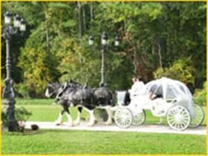 Comfort Carriages, Aquasco — Let Comfort Carriages help you live the fantasy you have always dreamed of on your special day!