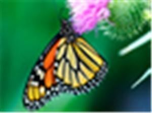Butterflies Abound, Escondido — Butterflies Abound offers you the opportunity to experience beauty in flight. We offer live butterflies and butterfly themed gifts for all of your memorable moments. Remember your moments and watch your dreams take flight.