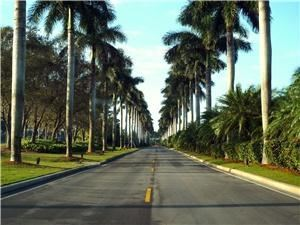 Clubhouse, Deering Bay Yacht & Country Club, Miami — Our beautiful, Royal Palm tree lined entrance.