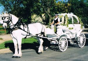 Angeli Carriages, Austin — White horse with white Cinderella carriage