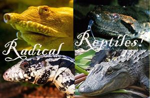 RADICAL REPTILES, Snakes-N-Scales and Turtle Tales, Wanaque — Radical Reptiles