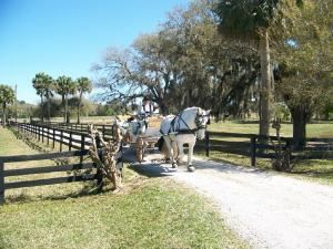 Long Riders Stables LLC, Fort Pierce