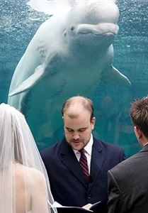 Full Day Photography Package, We Click Photography, Toronto — A Whale of a Wedding