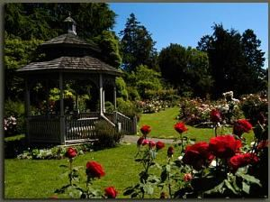 Rose Garden, Woodland Park Zoo, Seattle — Rose Garden