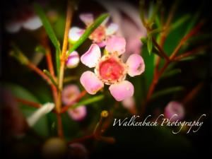 Walkenbach Photography, Buckeye