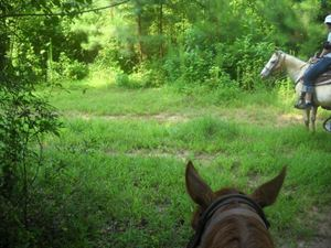 Vision Board Horseback Riding Retreat, Soul Discovery on Horseback, Acworth — horseback riding