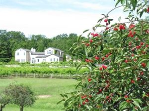 Grey Hare Inn Vineyard B & B