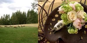 Nevada County Weddings~ Joy of Life Events