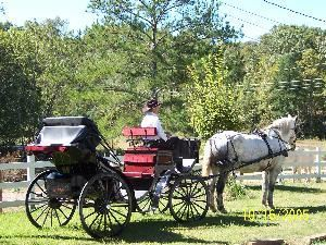 Diamond D Ranch Horse And Carriage Services