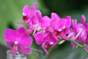 Wild Orchid Photography