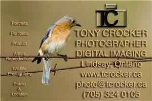 Tony Crocker, Photographer