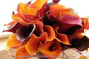 CallaLily Flowers and Floral Supplies, Castro Valley — CallaLily specializes in events and weddings! We offer fresh flowers arrangements, bouquets and other floral pieces with clean & modern designs, excellent customer service and reasonable pricings. Please check out our website at www.callalilyweddingflowers.com