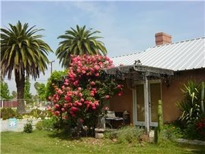 Twin Palms Ranch B & B, Hemet — Roses cover the Little House cottage, while the Twin Palms sway in the gentle Hemet breeze.