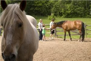 THE POWER OF HORSES AT SADDLEWOOD FARM