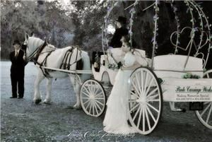Pinto Carriage Works, LLC - Daytona Beach, Daytona Beach — Our Cinderella horse carriage at the Ribault Club in Jacksonville, Florida.