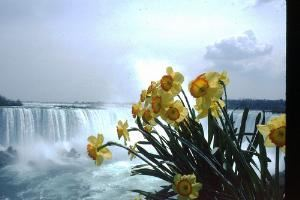 Tours of Niagara Falls from Toronto