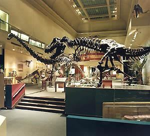Dinosaur Hall, Smithsonian National Museum of Natural History, Washington — Dinosaur Hall features an extensive collection of fossilized skeletons and cast models, including the carnivorous Tyrannosaurus Rex facing off with the Triceratops. The Triceratops exhibit shows the first accurate dinosaur skeleton in virtual motion, achieved through the use of scanning and digital technology. 