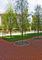 Clagett Executive Patio, Samuel Riggs IV Alumni Center, College Park