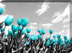 Teal Tulip Events
