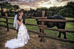 Sharpe Wedding Photography