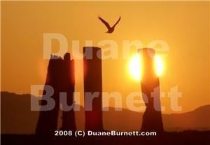 Duane Burnett Photography